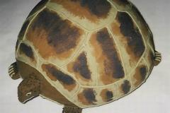 zelva